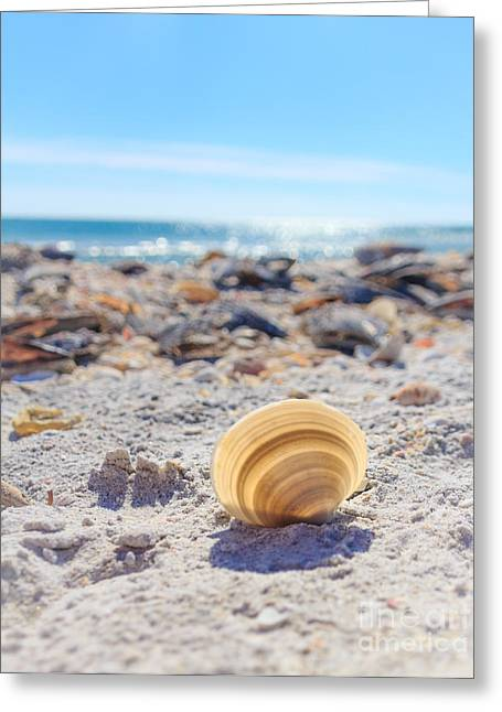 Greeting Card featuring the photograph Cockle Shell Summer At Sanibel by Peta Thames