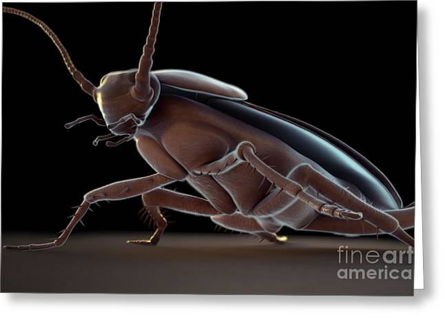 Cockroach Greeting Card by Science Picture Co