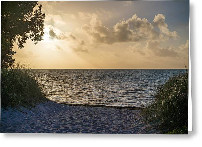 Coco Plum Sun Greeting Card by Kristopher Schoenleber