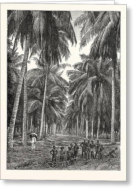 Cocoa-nut Plantation In Ceylon Greeting Card by Sri Lankan School