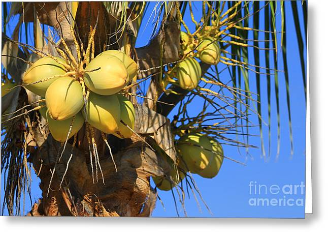 Coconut 2 Greeting Card by Teresa Zieba