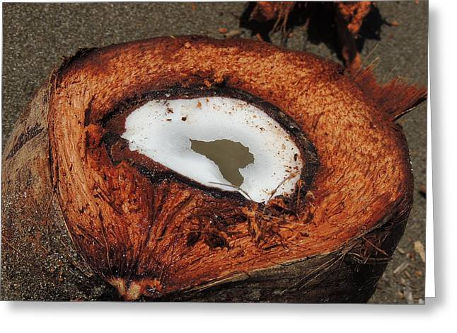 Coconut Greeting Card by Gregory Young