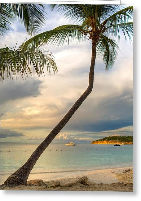Coconut Grove Greeting Card