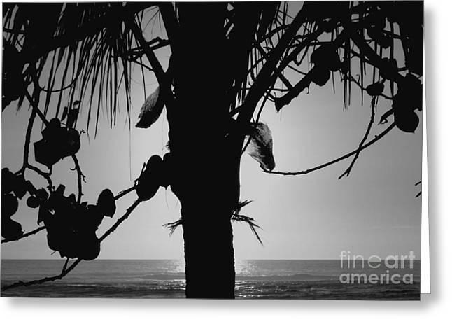 Coconut Palm - Cocotier - Ile De La Reunion - Reunion Island Greeting Card by Francoise Leandre
