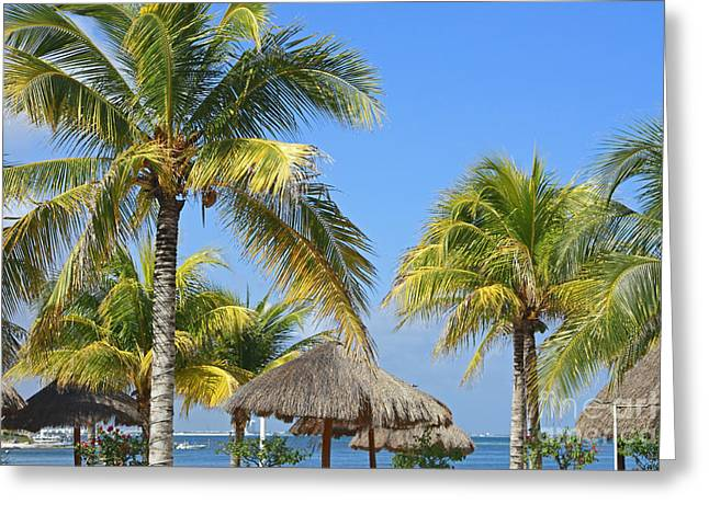 Coconut Palm Forest Greeting Card by Charline Xia