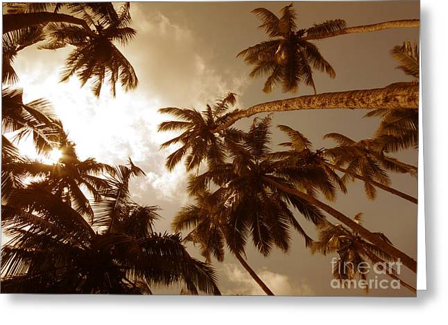Coconut Palms Greeting Card