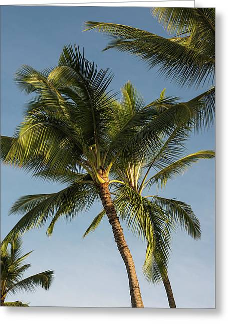 Coconut Palms Sway In Tropical Breezes Greeting Card by Robert L. Potts