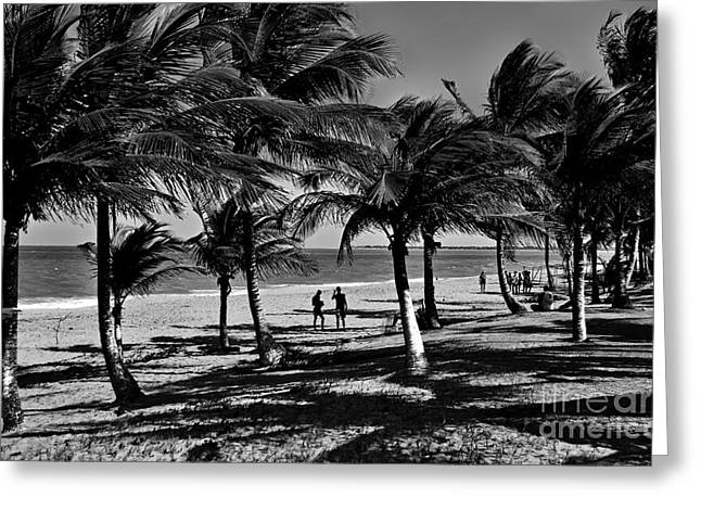 Coconut Trees On A Typical Bahia Beach Greeting Card by Carlos Alkmin