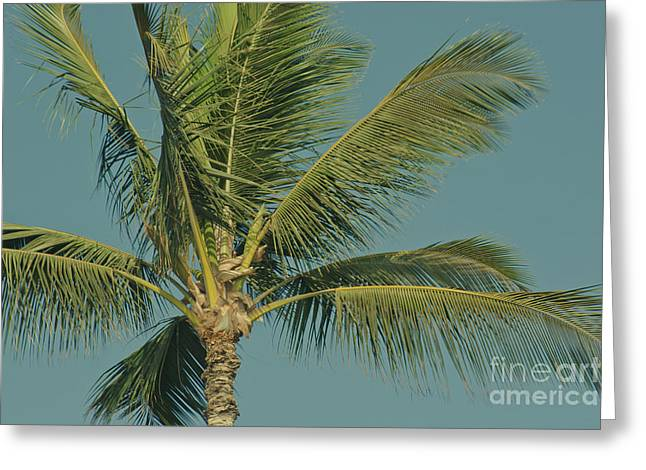 Cocos Nucifera - Niu - Palma - Po'olenalena Beach Maui Hawaii Greeting Card by Sharon Mau