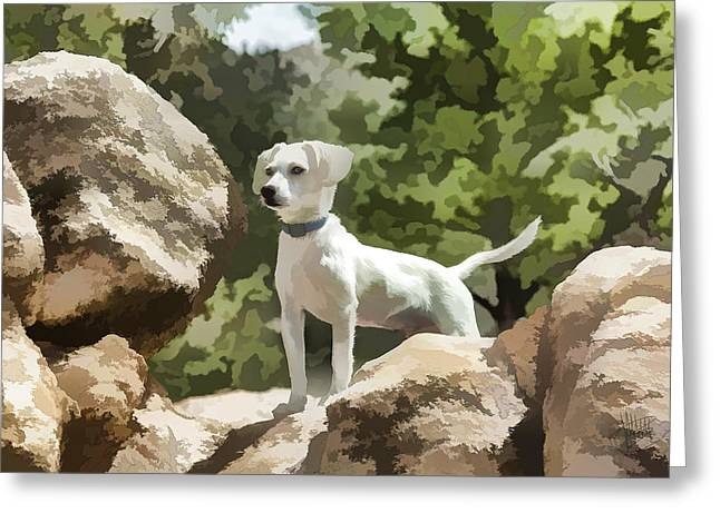 Cody On The Rocks Greeting Card