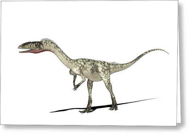 Coelophysis Dinosaur Greeting Card