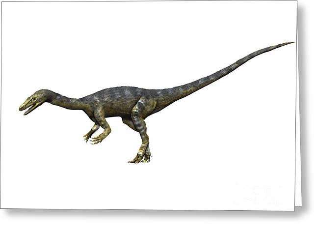 Coelophysis Dinosaur Greeting Card by Nobumichi Tamura