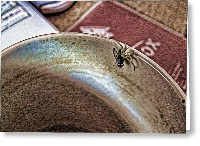 Coffee Cup Spider Fly Oh My Greeting Card