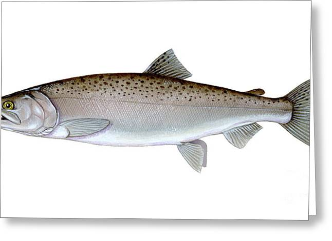 Coho Salmon Greeting Card