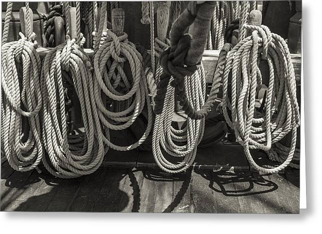 Coiled Black And White Sepia Greeting Card by Scott Campbell