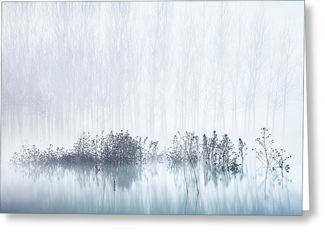 Cold & Foggy Morning In The Swamp Greeting Card