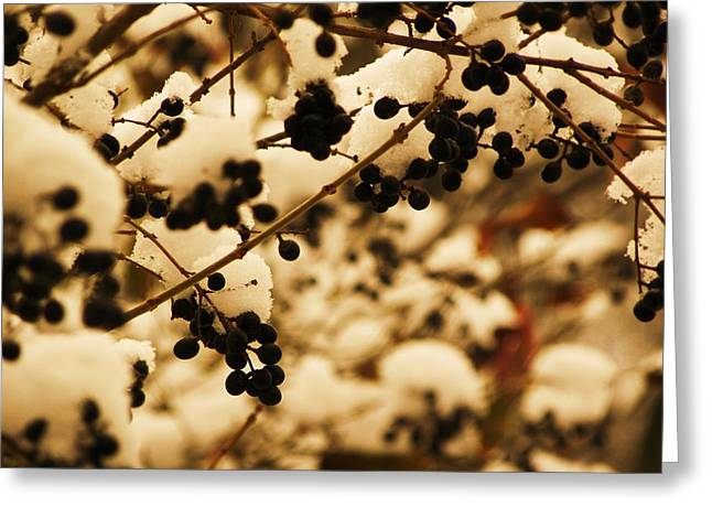 Cold Berries Greeting Card by Christian Rooney