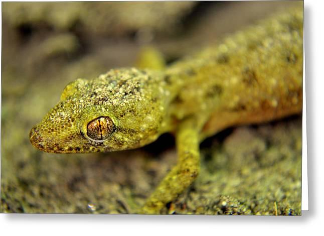 Reptile Lizard Close Up Greeting Card