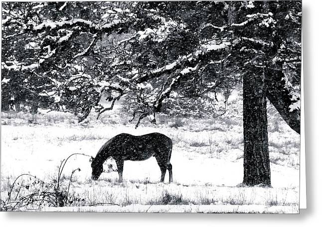 Greeting Card featuring the photograph Cold Comfort by Julia Hassett
