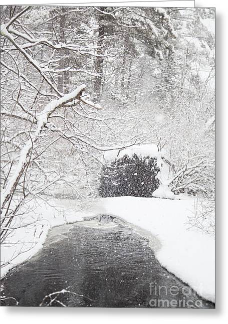 Cold Comfort Greeting Card by Sue OConnor