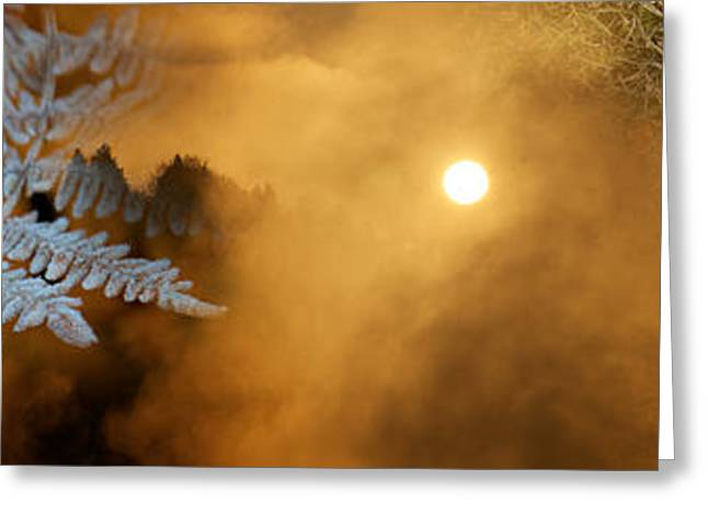 Cold Feet Leaves Greeting Card by Panoramic Images