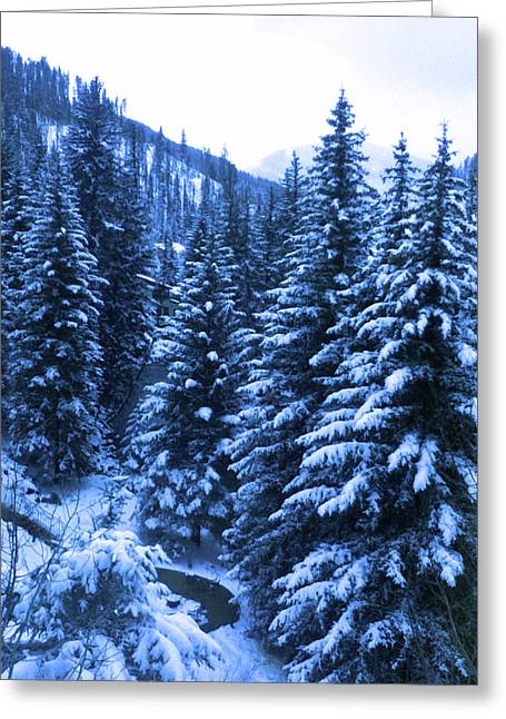 Cold In Colorado Greeting Card by Tammy Sutherland