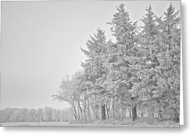 Cold Lace Greeting Card by Odd Jeppesen