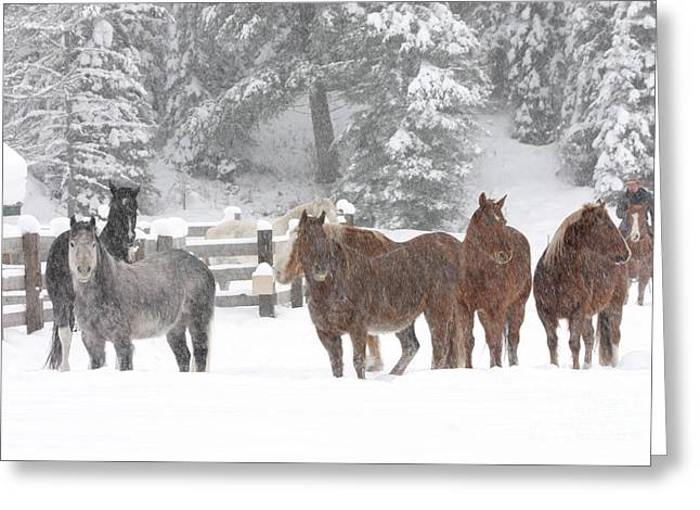 Cold Ponnies Greeting Card