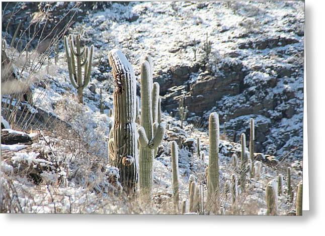 Cold Saguaros Greeting Card by David S Reynolds