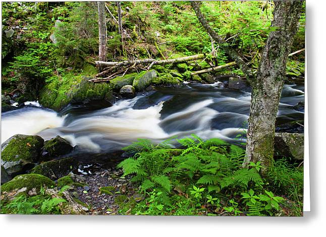 Cold Stream In Maine's Northern Forest Greeting Card by Jerry and Marcy Monkman