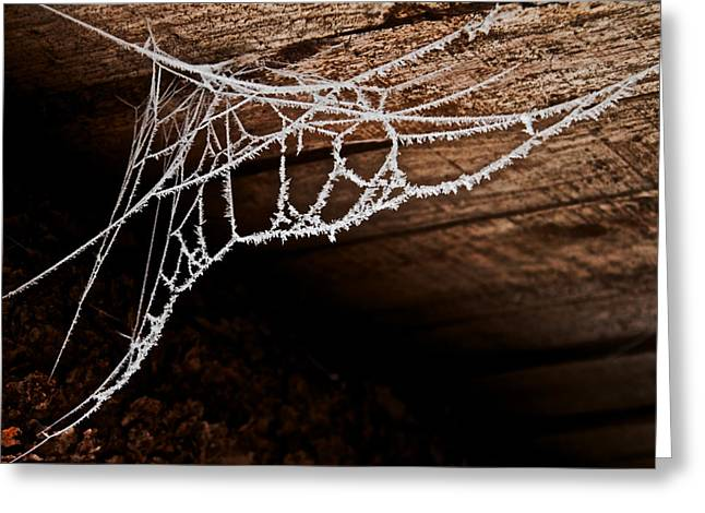 Cold Web Greeting Card by Odd Jeppesen