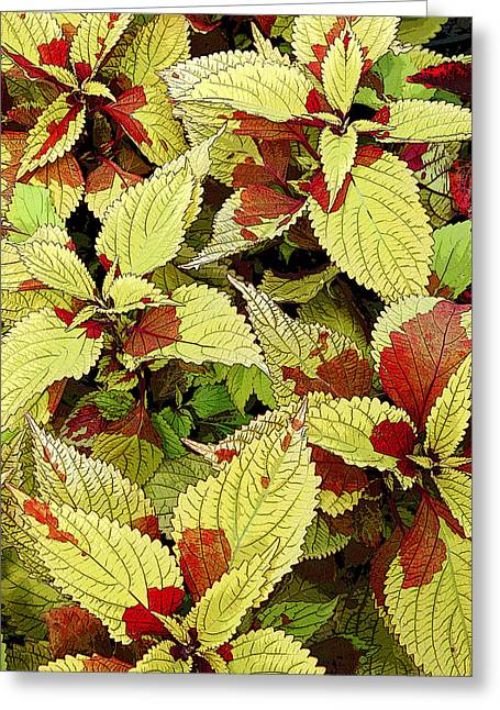 Greeting Card featuring the photograph Coleus Detail by Rob Huntley