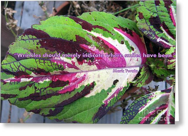Coleus Smile Greeting Card by Marlene Rose Besso