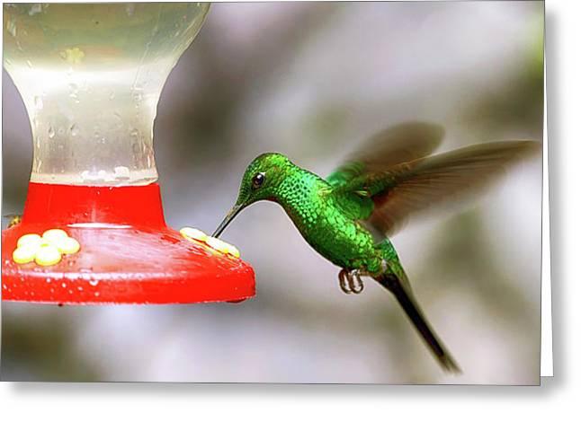 Colibri Hummingbird On Bird Feeder Greeting Card