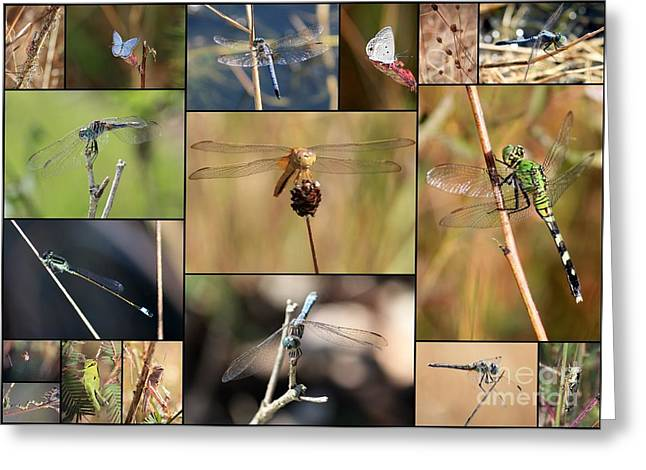 Collage Marsh Life Greeting Card by Carol Groenen