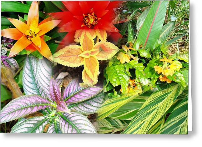 Collage Of Tropical Colors Greeting Card by Van Ness