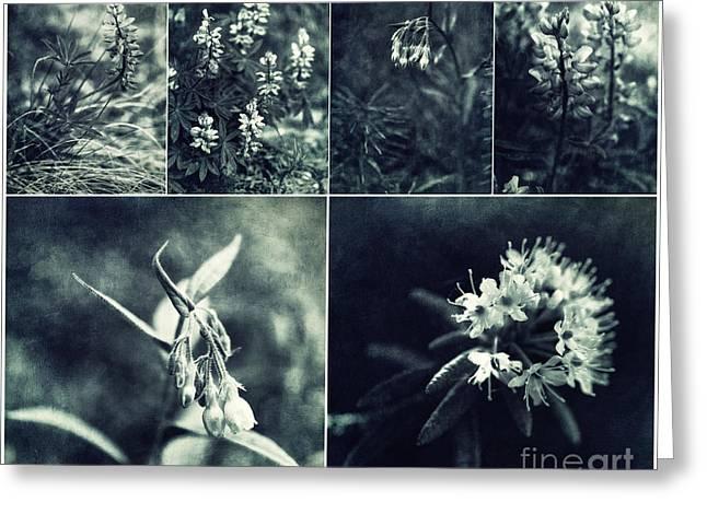 Yukon Wild Flower Collage Greeting Card by Priska Wettstein