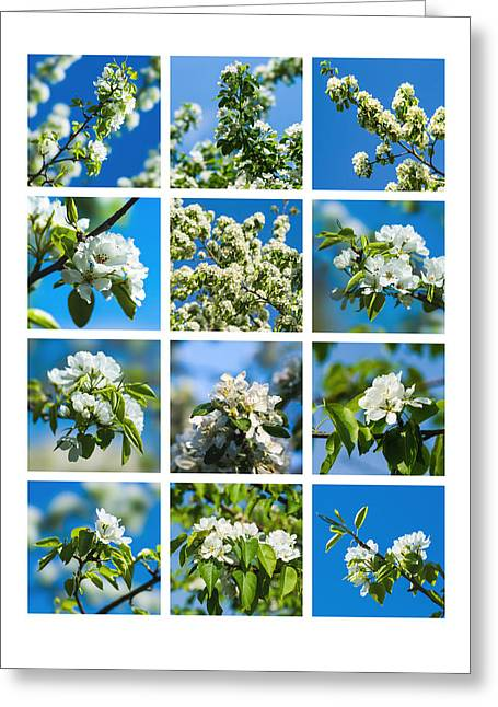 Collage Spring Blossoms 1 Greeting Card by Alexander Senin