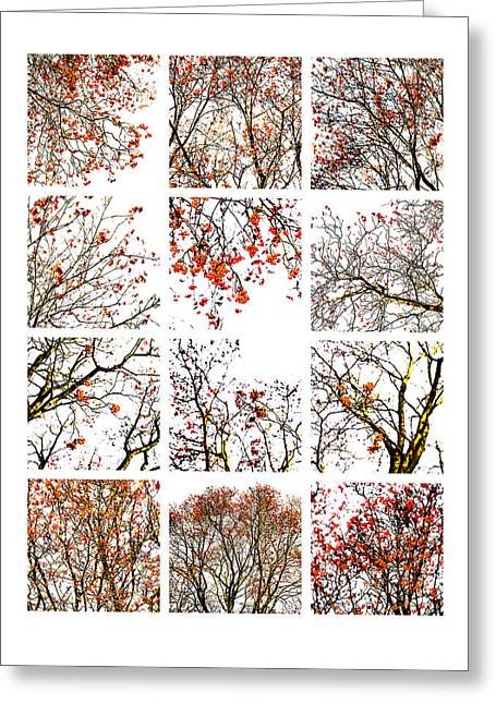 Collage The Beauty Of Rowan Greeting Card by Alexander Senin