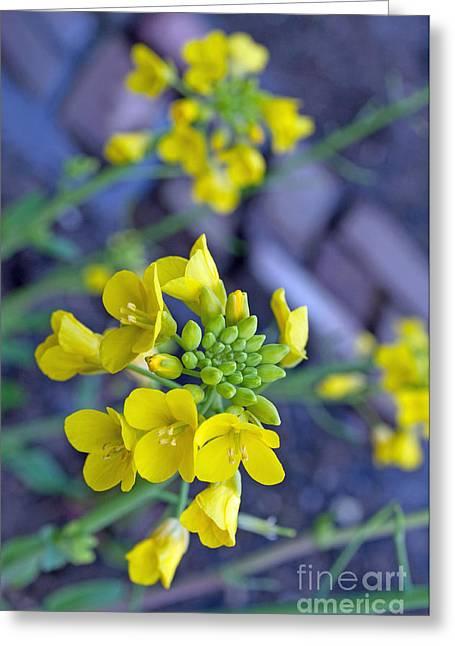 Collard Greens Flora Greeting Card by Gwyn Newcombe