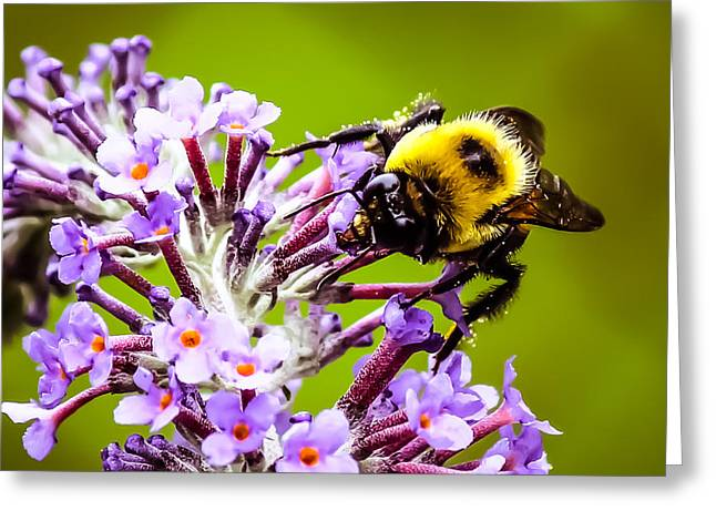 Collecting Pollen Greeting Card