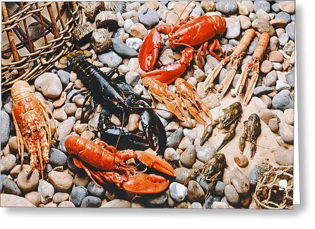 Collection Of Shellfish Greeting Card by English School