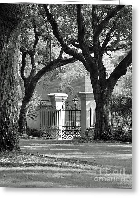 College Of Charleston Gate Greeting Card