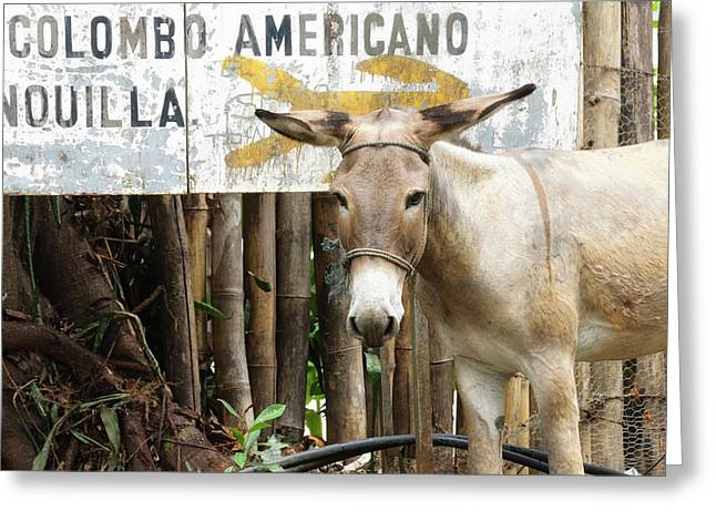 Colombia, Minca Mule And Sign Greeting Card by Matt Freedman