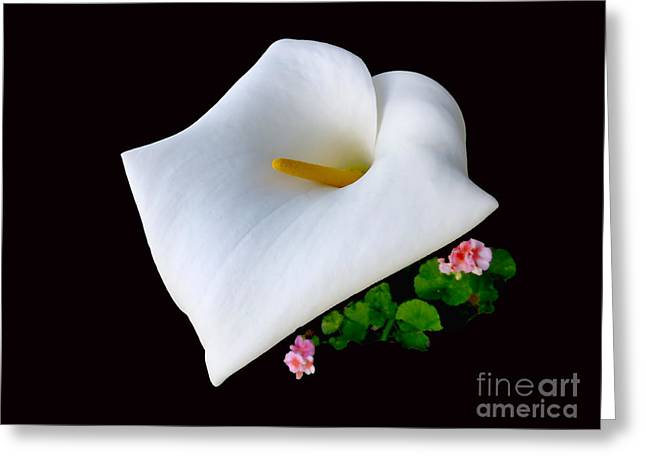 Colombian Calla Lily Greeting Card