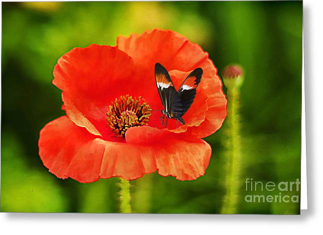 Color Coordinated Greeting Card by Darren Fisher