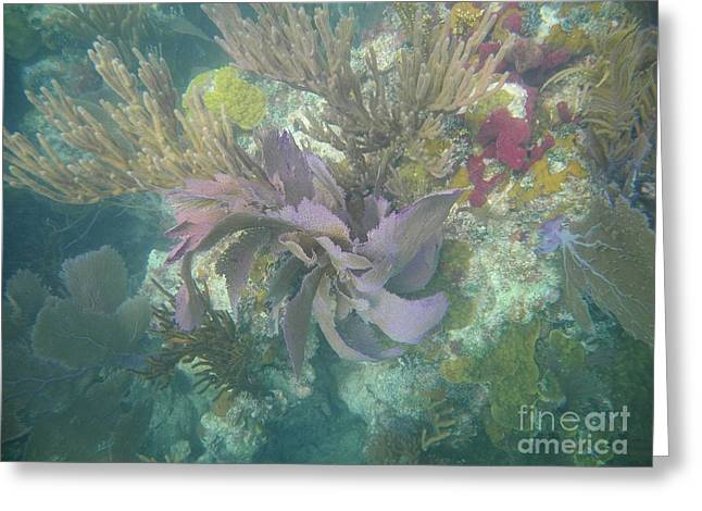 Color Corals Greeting Card