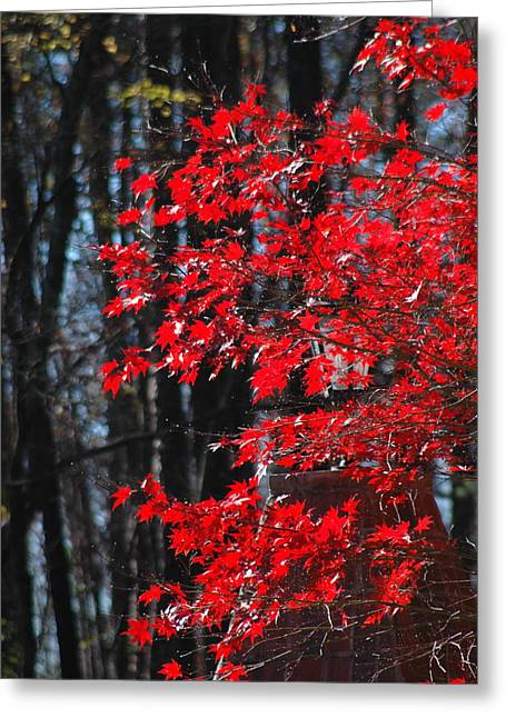 Color Filled Greeting Card by Les Scarborough
