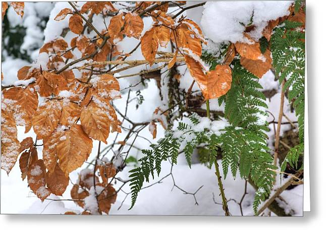 Color In The Snow Greeting Card by David Birchall