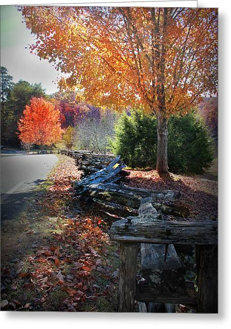 Greeting Card featuring the photograph Color by Kelly Hazel